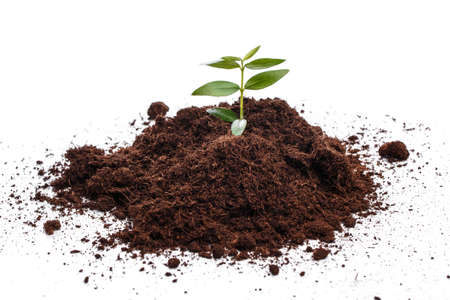 soil: Small green sprout in soil over white background