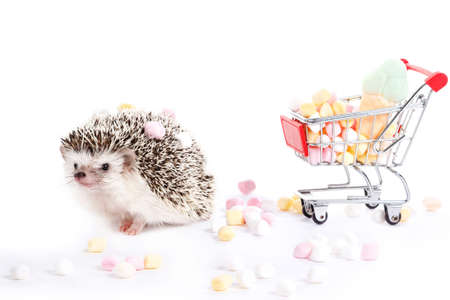 prettiness: Hedgehog and shopping trolley with candies on white background