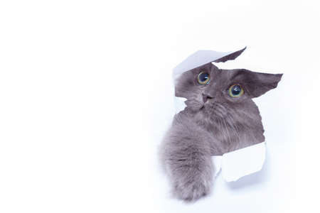 Cute little kitten looking out from hole of torn paper Stock Photo