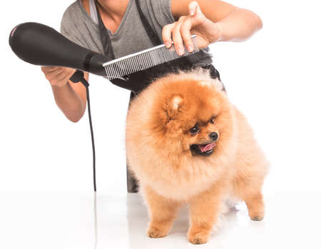 grooming: Woman is grooming a dog on white background Stock Photo