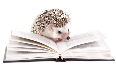 African hedgehog and book on white background Stock Photo
