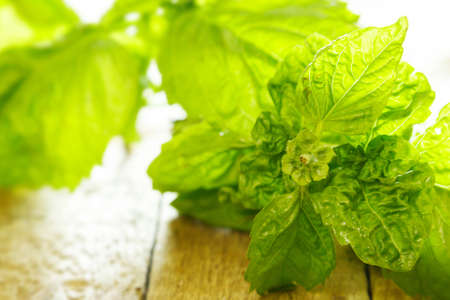 Green basil plant on wooden table