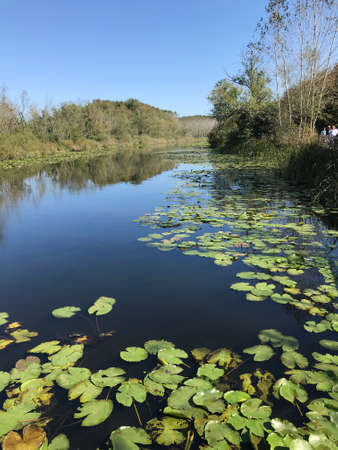 Turkey's second biggest freshwater swamp forest: Acarlar in Sakarya, Turkey Stock Photo