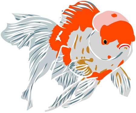 goldenfish Illustration