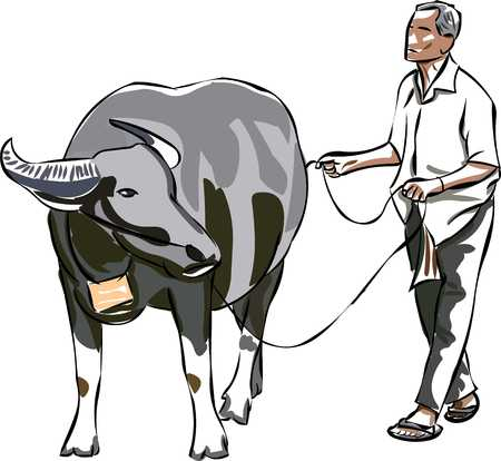 paddy field: Farmer and his buffalo