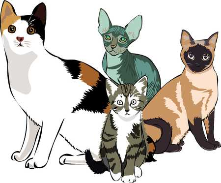Cute cats that are looking for you. Ilustrace