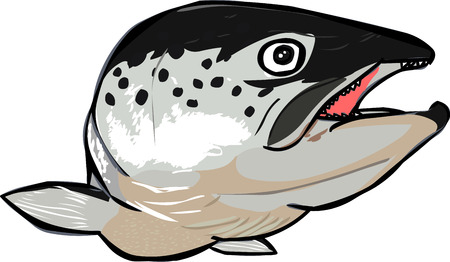 spawning: The salmon are swimming come to you.