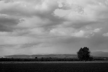 Black and white landscape shot of an isolated tree on a grass field under dramatic sky