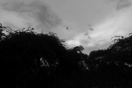 Black and white shot of an airplane passing over the trees