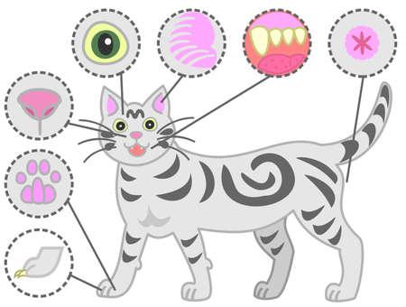Les parties du corps du chat