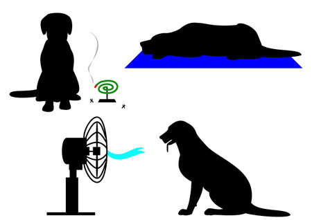 insect repellent: dog in summer