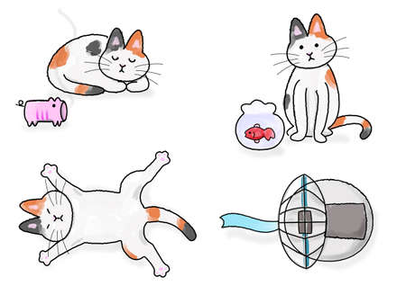cool down: Japanese cat in summer