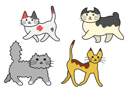 bobtail: walking cats