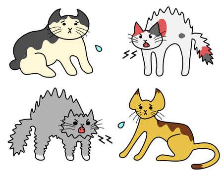 hissing: gatti sibilo, gatti spaventati