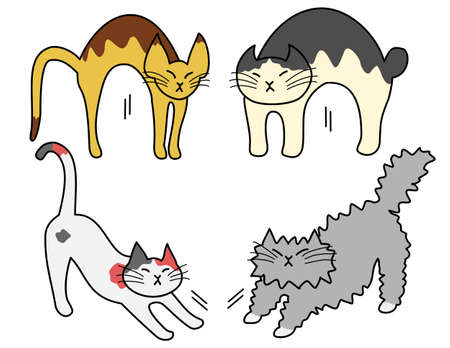 short haired: stretching cats