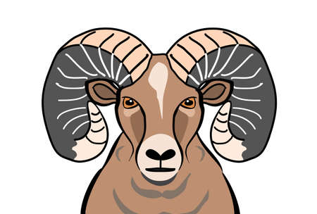 bighorn: colored Bighorn sheep Illustration