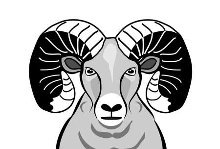 monochrome Bighorn sheep