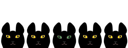 heterogeneous: Yellow eyed black cats and a green eyed black cat