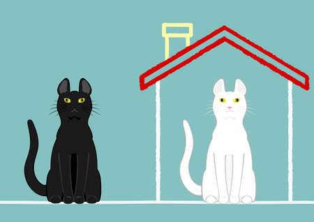 家と家の外猫