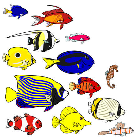 butterflyfish: Tropical sea fish species Illustration