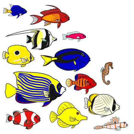 anthias fish: Tropical sea fish species Illustration