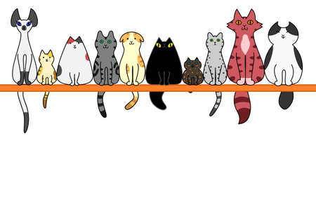 Cats front in a row with copy space