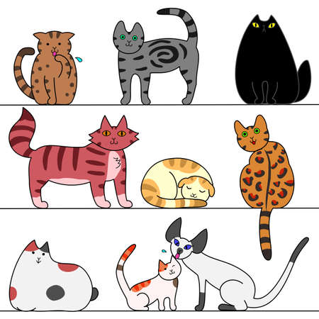 several cats