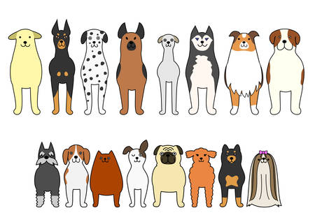 shih: standing dogs