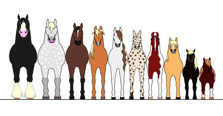 various horses lining up in height order 일러스트
