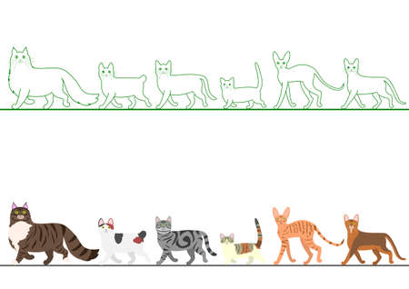 abyssinian: set of various cats walking in line