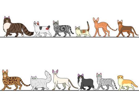 줄을 서서 걷는 다양한 고양이 세트