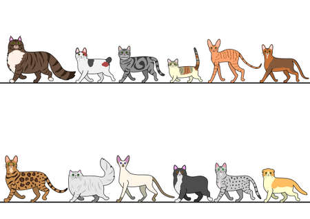 bengal: set of various cats walking in line