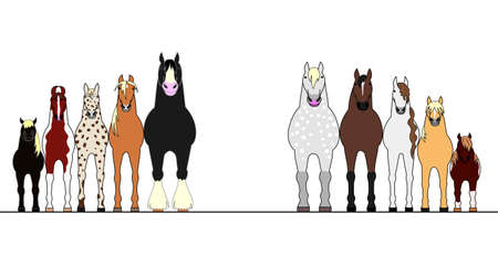 height: various horses lining up in height order Illustration