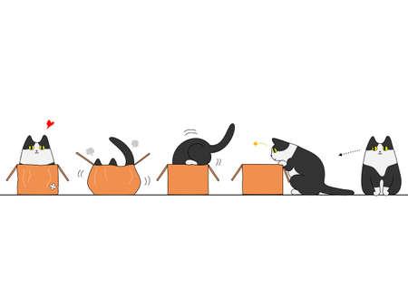 Cat wchodząc w pudełku