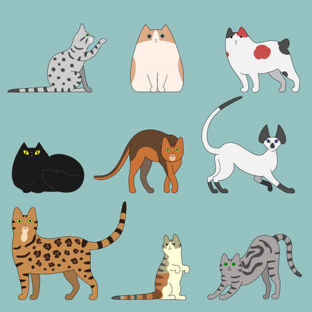 abyssinian: various cats Illustration