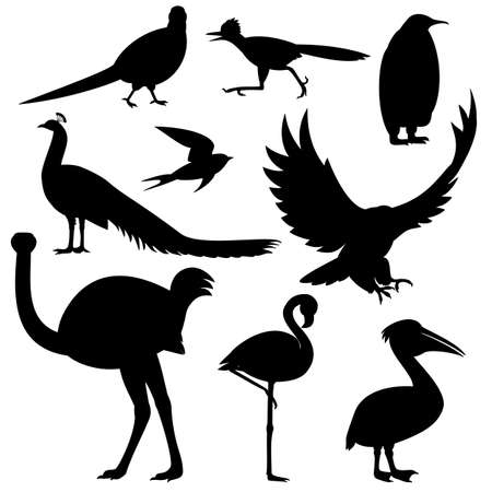 various silhouettes of birds