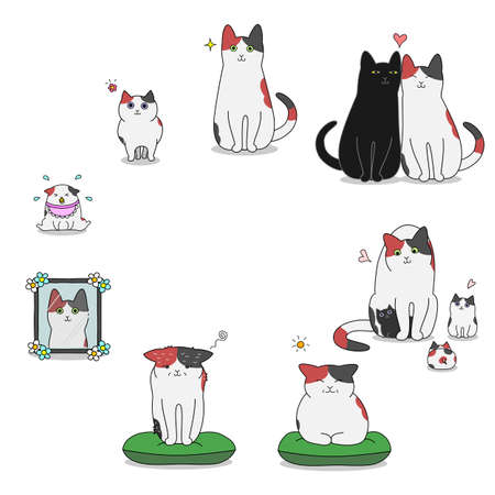 Cat's life cycle