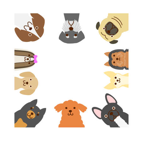 schnauzer: Small dogs square frame Illustration