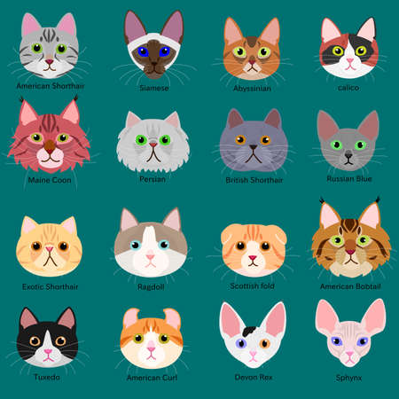 calico: cats face set with breeds name Illustration