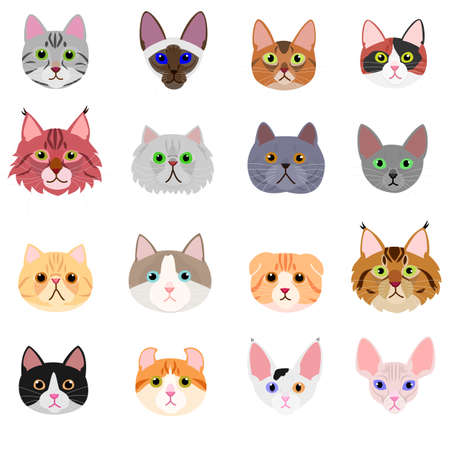 cat face set on white background