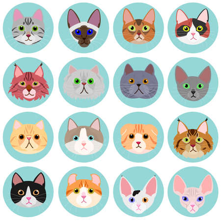 abyssinian cat: cat face set with circle