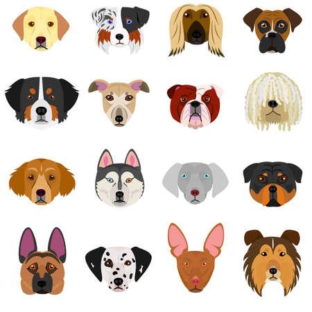 犬顔白い背景のセット