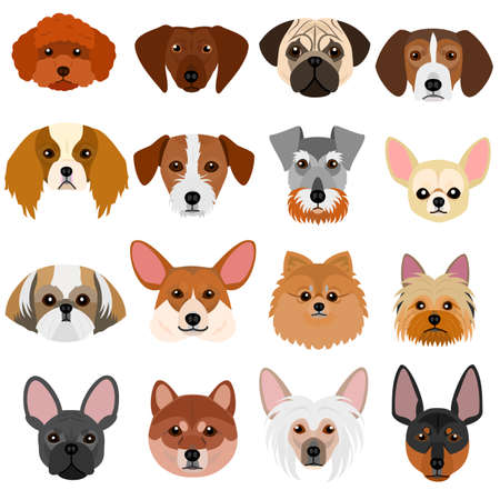 small dog faces set on white background
