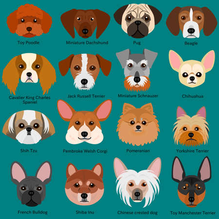small dog: small dog faces set with breeds name Illustration