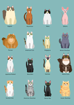 scotish: cats breed