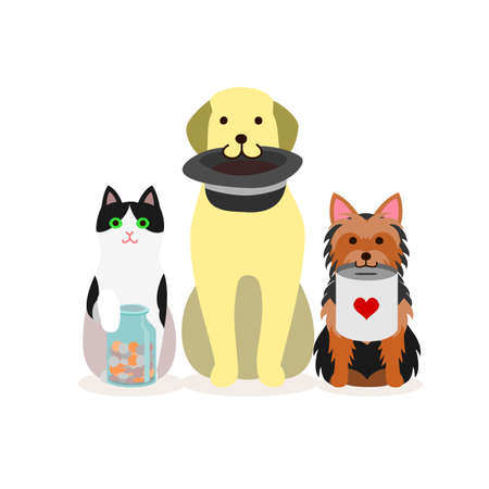 Small group of dogs and cat with donation box