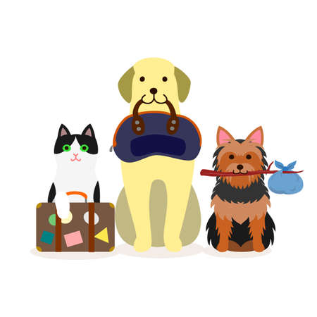 Small group of dogs and cat with travel bag