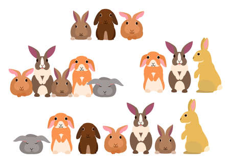 lop: Group of rabbits