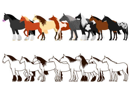 shire horse: Horse banner set in white background.