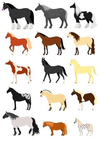 Horse breeds set Imagens - 74095818
